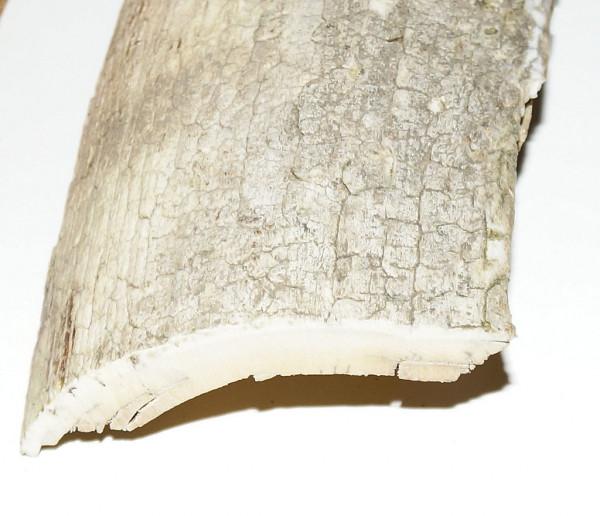 Rindenstück, weiß mit Struktur