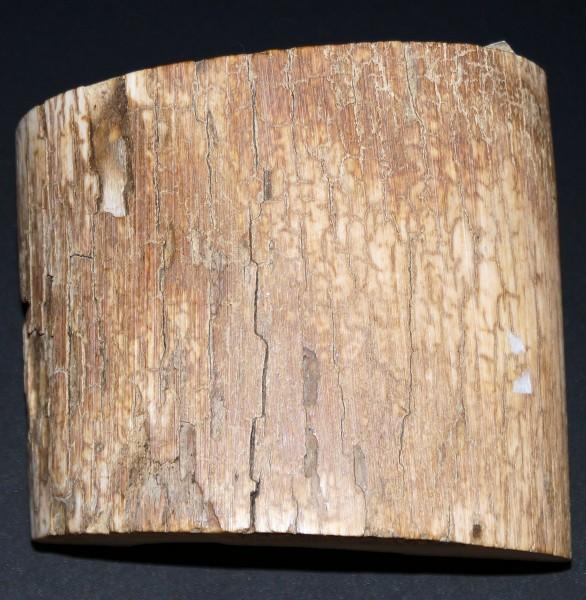 Mammutelfenbein Rohmaterial