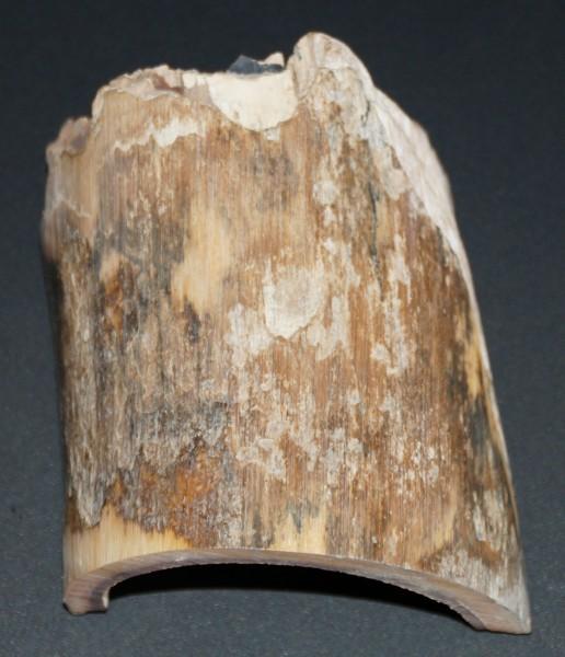 Rindenstück 8,5x7,5x0,6 cm, dekorativ